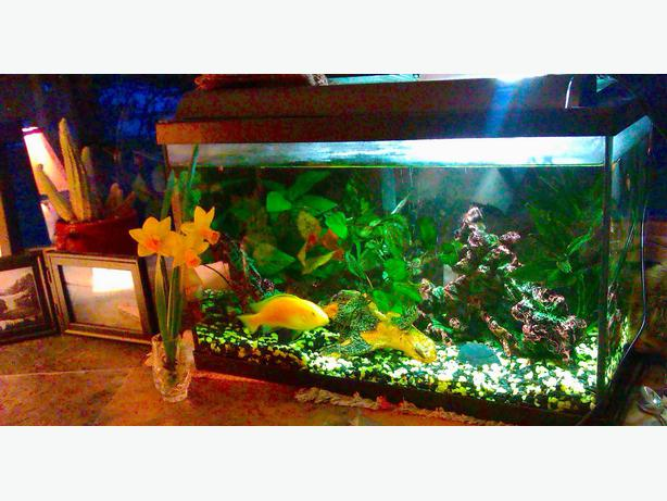 10 Gallon Fish Tank   5 gallon filter/aerator North Saanich & Sidney