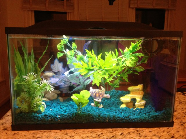 10 Gallon Home Aquariums Images & Pictures   Becuo