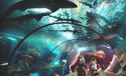 Oregon Coast Aquarium   Newport, OR | Groupon
