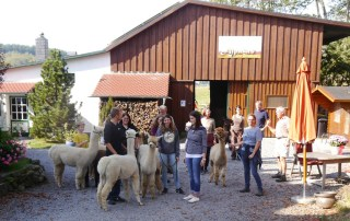 Alpaka Einsteigerseminar-September