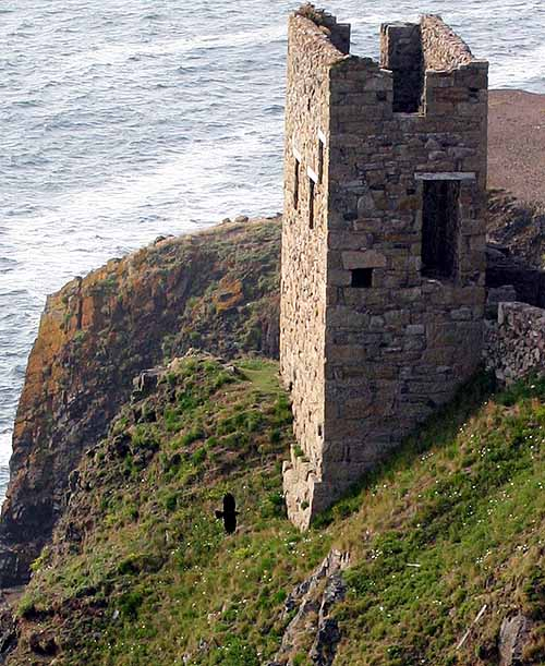Cornish chough and tin mine Two Cornish icons - The chough and the tin mine