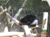 The sunbear enclosure at the Lok Kawi Wildlife Park zoo is a bit sad.
