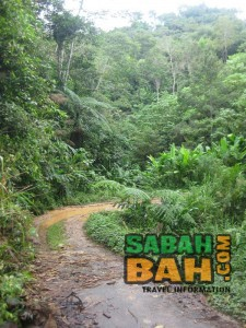 The end of the Salt Trail jungle trek on the Tambunan side