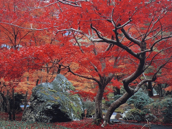 48 Japon - sabali blog