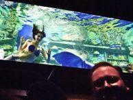 Mermaids swim in Dive Bar's tank on opening night.