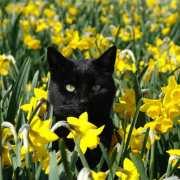 Plantes toxiques pour chat