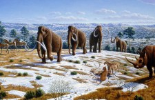 Ice age megafauna of Norther Spain.  - Mauricio Anton