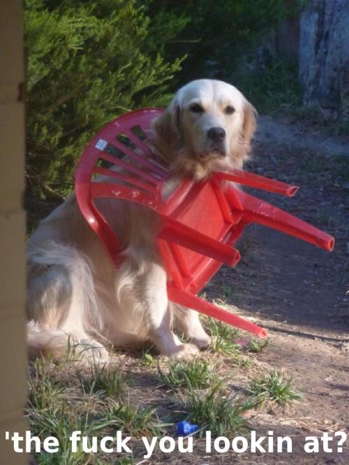 Medium Of Angry Dog Meme