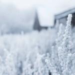 6 Tips For Battling Winter Dry Skin Naturally