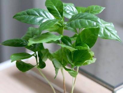 Eat your plants + pesto!
