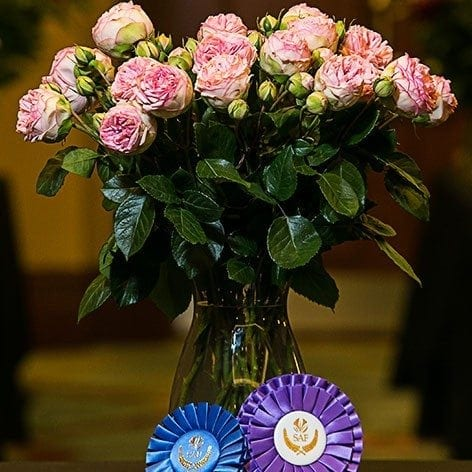 Best in Class: Garden Rose 'Bridal Piano' Alexandra Farms
