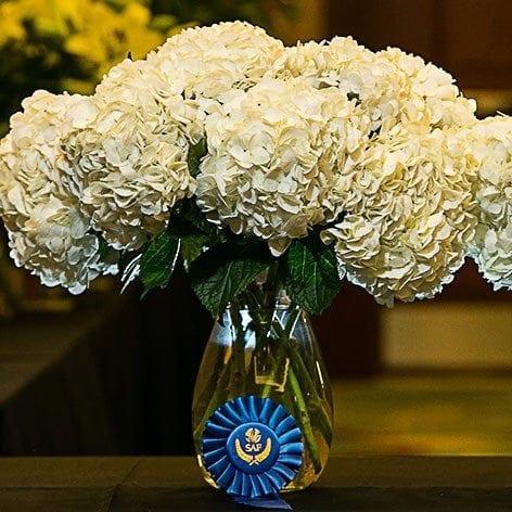 Best in Class: Other Cut Flower 'XL White' Hydrangea Arvi Farms-Groflowers