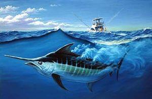 Blue Marlin (google image!)