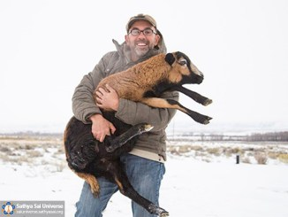 saving-animals-from-slaughter-usa-arcadia-project-3