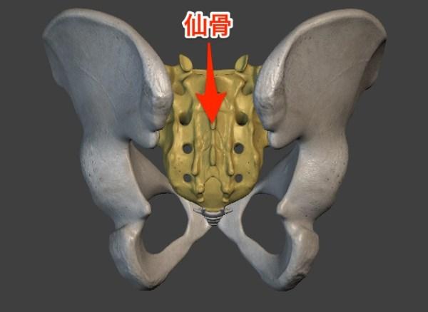 sacroiliac-joint2