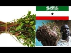 QAADKA Reer Somaliland May Ka Raysteen Mise Way u-Xiiseen Warbixin Daawo