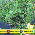 DAAWO:- Xukuumada Somaliland Maxay Ka Tidhi Iscasilaada Raysal Wasaarihii Ethiopia Feb 16, 2018