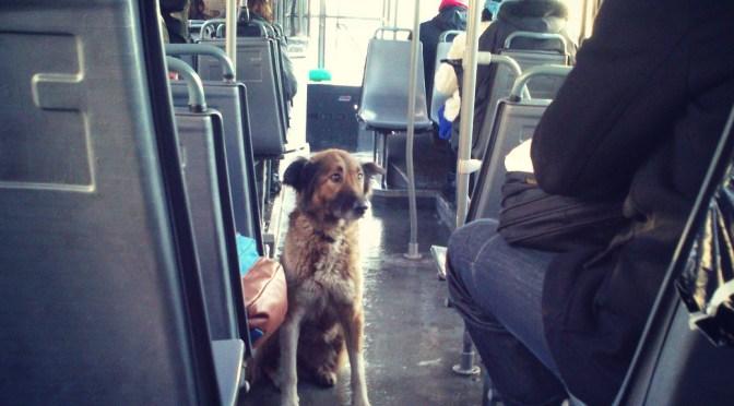Priča o psu u autobusu 1. januara