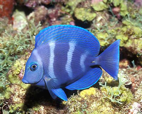Pet fish types best tropical fish for a community tank for Exotic fish and pets