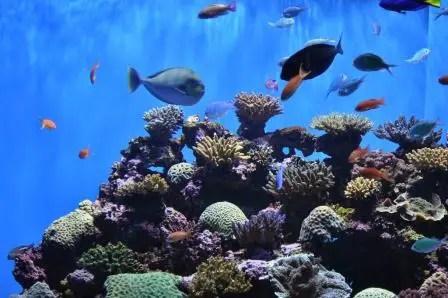 how to make a saltwater aquarium