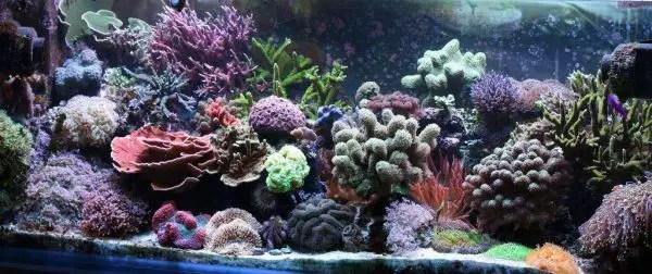 Reef Aquarium At Home