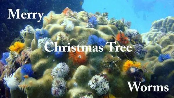 Merry Christmas Tree Worms