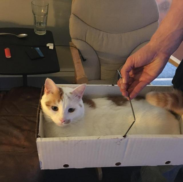 Cat in a box From the makers of Kitton Mittonshellip