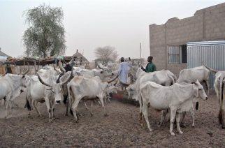 Pas d'aide canadienne au développement pour le village de Montréal au Sénégal