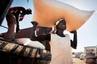 VIDÉO – Le Sénégal veut atteindre l'auto-suffisance en riz d'ici 2017