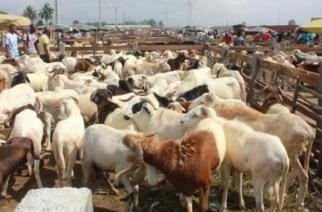 Le Sénégal achète ses moutons pour la Tabaski en Mauritanie