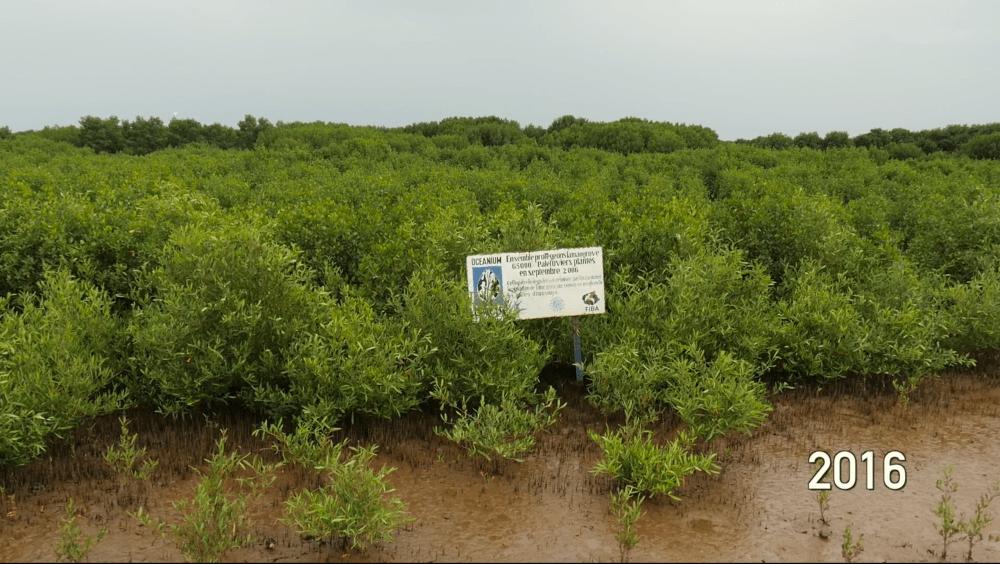 APRES - 2016, sauvons la Mangrove
