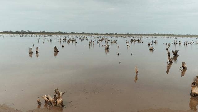 avec Haidar, sauvons la mangrove