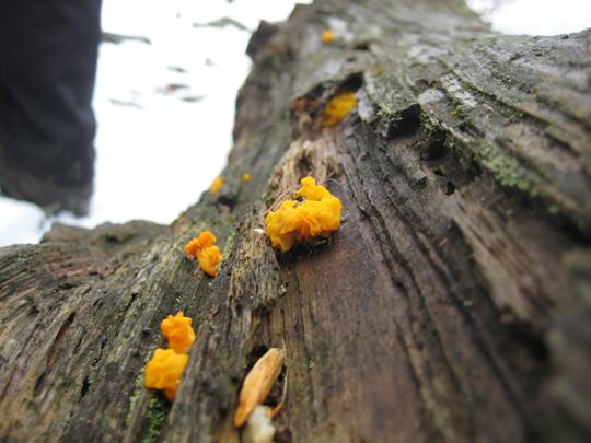 Fungus near Mystery Point