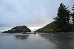 Vancouver Island & Black Bears