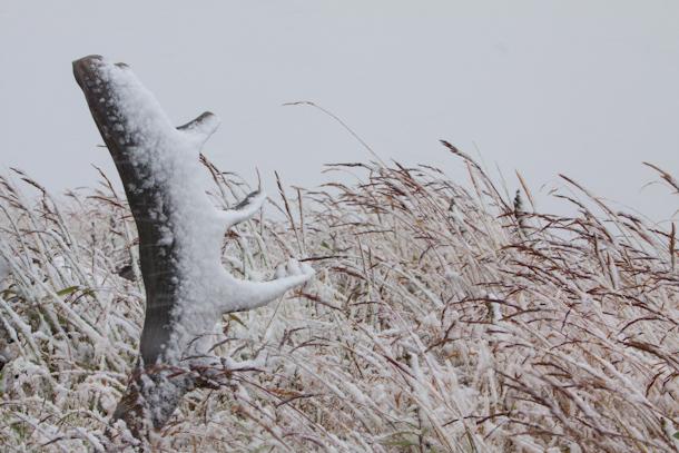 Denali National Park in snow