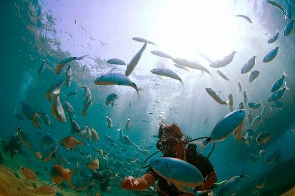 Underwater photograph taken in Fethiye