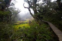 _MG_8222Key Summit, Milford Sound, Routeburn Track16