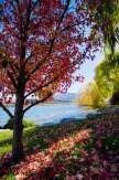 _MG_8576Photomatic ProArrowtown, Lake Hayes Walkway69