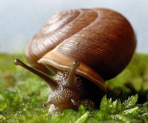 Snails-for-a-snail-farm