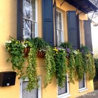 Historic Charleston + The Saturday 6