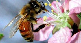 honey-bee-blogspot