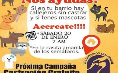 San Genaro por los animales: Jornada de castración gratuita