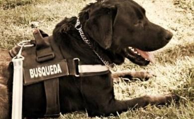Sumaron perros a la búsqueda del joven de Las Rosas desaparecido en Puerto Aragón
