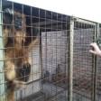 Rescataron a un Mono Carayá de una vivienda en Salto Grande