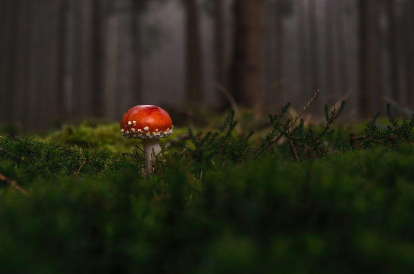 Lone Mushroom