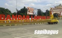 Lampung Pemasok Sapi Terbesar ke Jakarta
