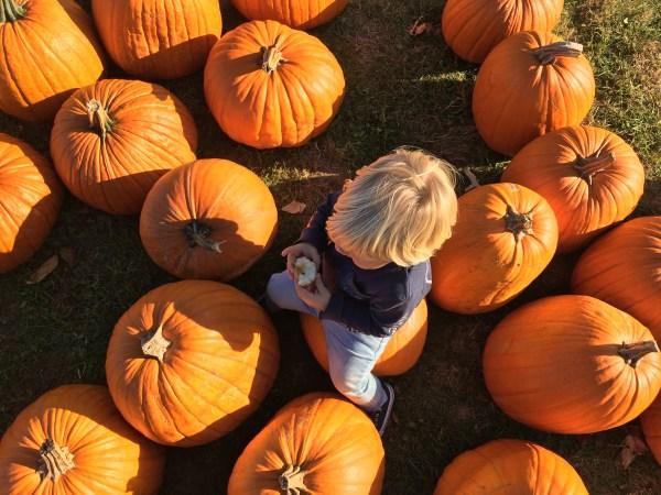 tommy picking a pumpkin