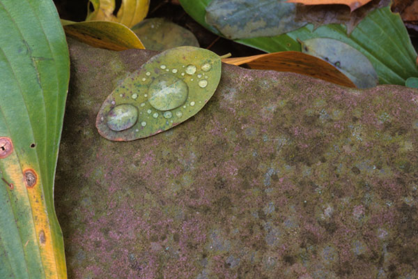 leaf_drops1