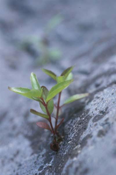 rockplant1