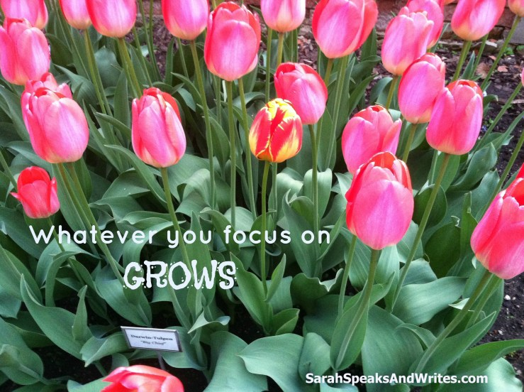 Whatever you focus on grows